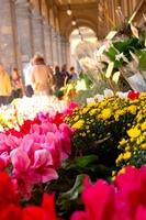 flower-market-florence-italy.jpg