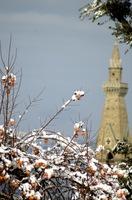 persimmons-in-snow.jpg