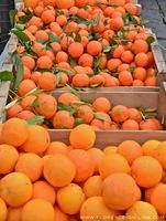 oranges-clementines.jpg