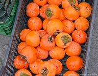 persimmons-cachi.jpg